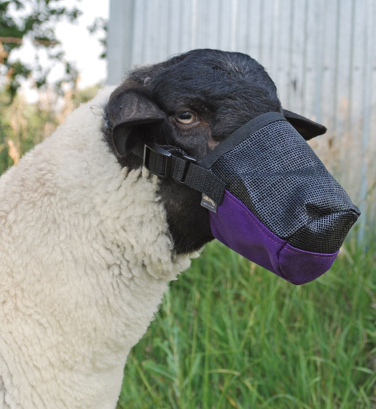 Pin by Valley Vet Supply on Goat & Sheep Goats