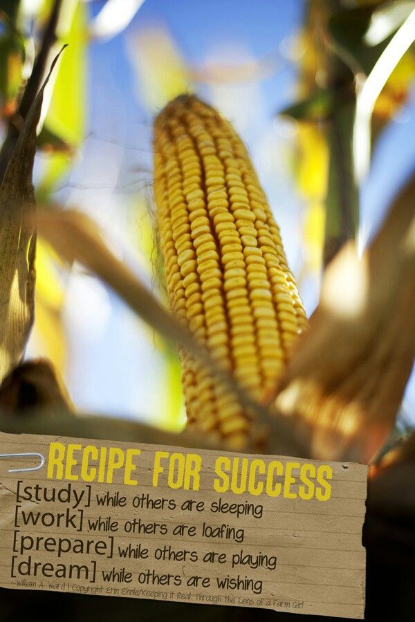 Corn Seed Ag Quote Words Quotes