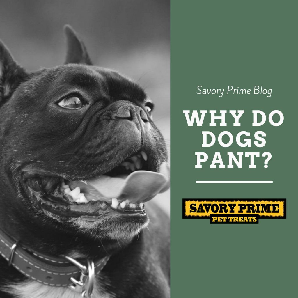 Why Do Dogs Pant Dog Pants Dogs Pet News