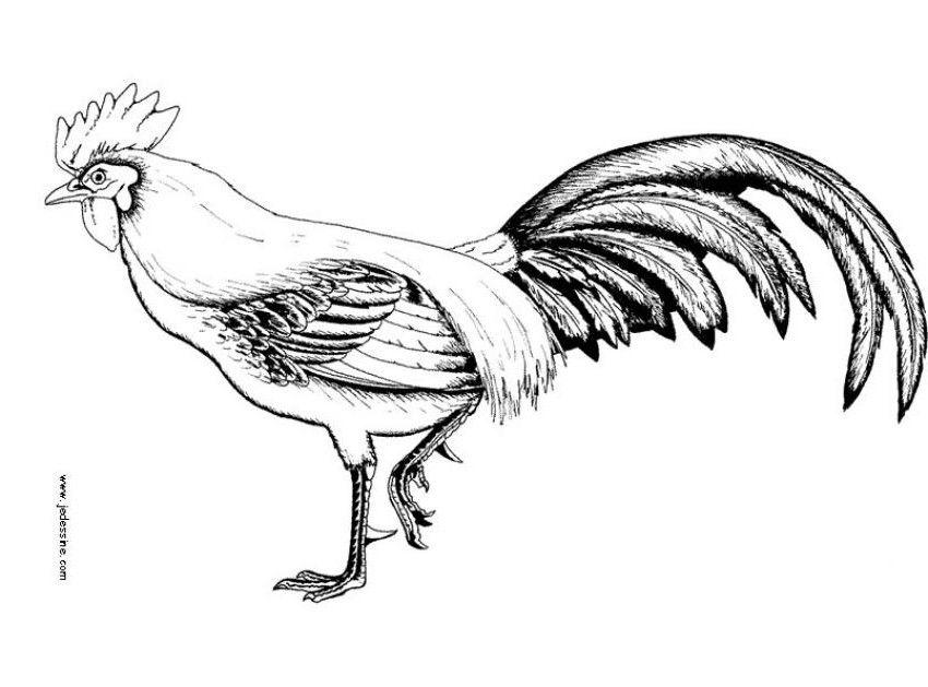 ilustracion | Aves Tattoo | Pinterest | Ilustraciones