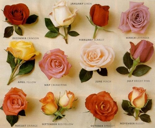 Pin By Bridal Musings Wedding Blog On Bouquets Types Of Roses Flowers Birth Month Flowers