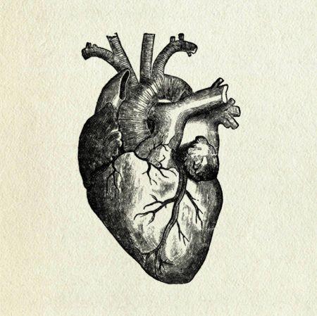 Amazing Anatomical Heart B Beautiful Black And White Drawing