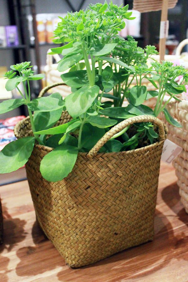 Green in a basket | summer 2012