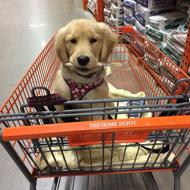 21 Stores That Will Welcome Your Dog With Open Arms Dog Friendly Stores Stores That Allow Dogs Puppy Friendly