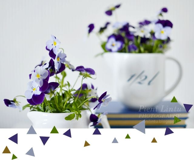 Pieni Lintu: Tuesday around the World - {Violets}