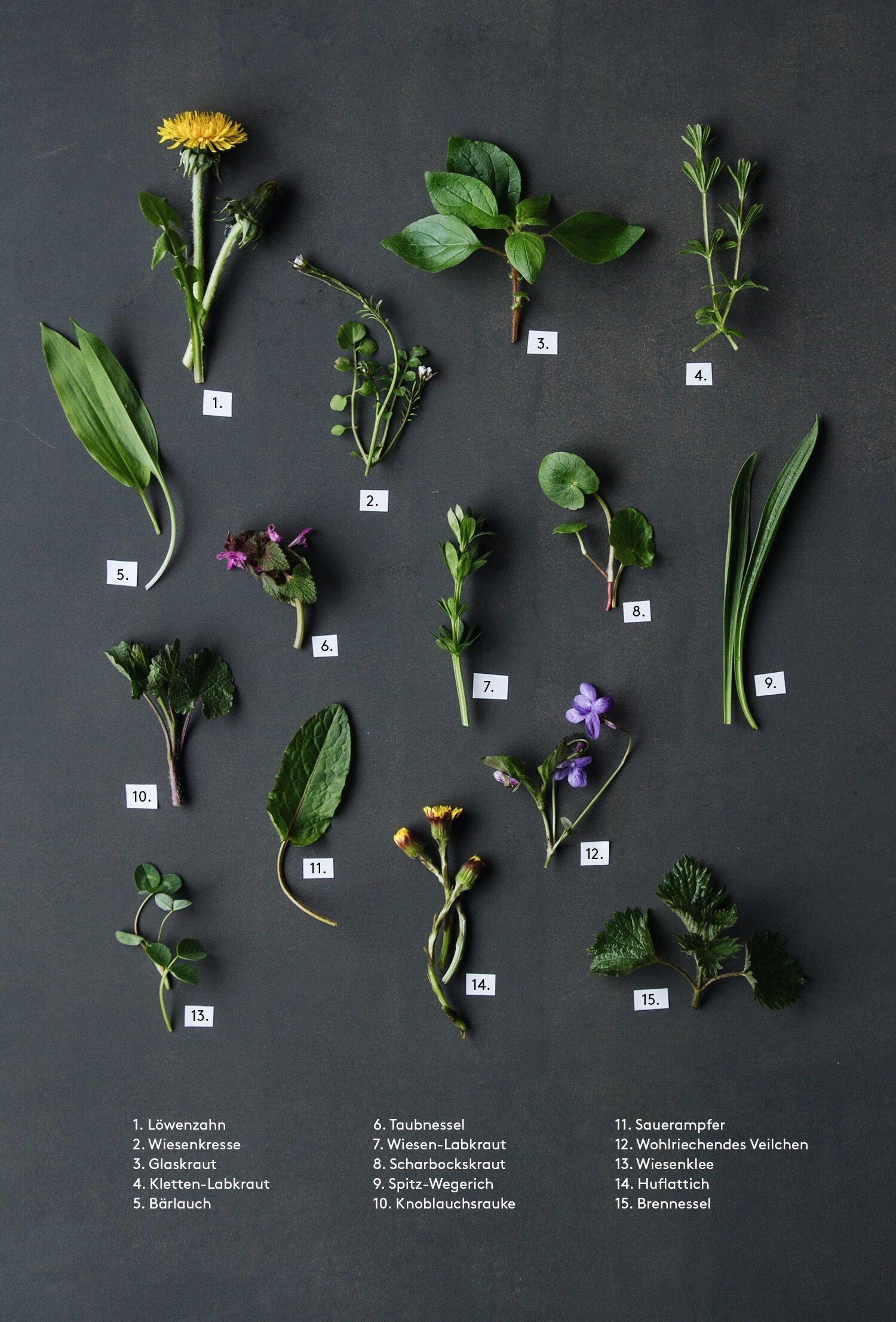 Wildkrauter Nom Nom Essbare Pflanzen Krauterpflanzen Krauter Pflanzen