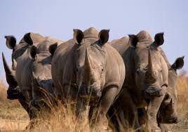 Afbeeldingsresultaat voor afrika natuur