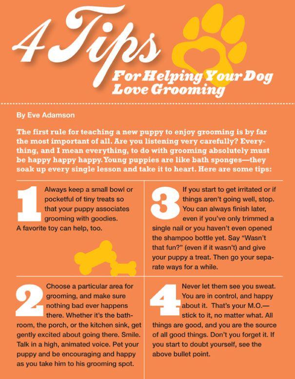 Help Your Dog Love Grooming Havanese Grooming Dog Grooming Tips Dog Grooming