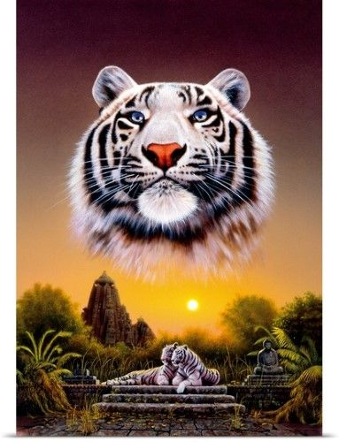 Chris Hiett Poster Print Wall Art Print Entitled White Tiger None Tiger Images Tiger Pictures Big Cats Art