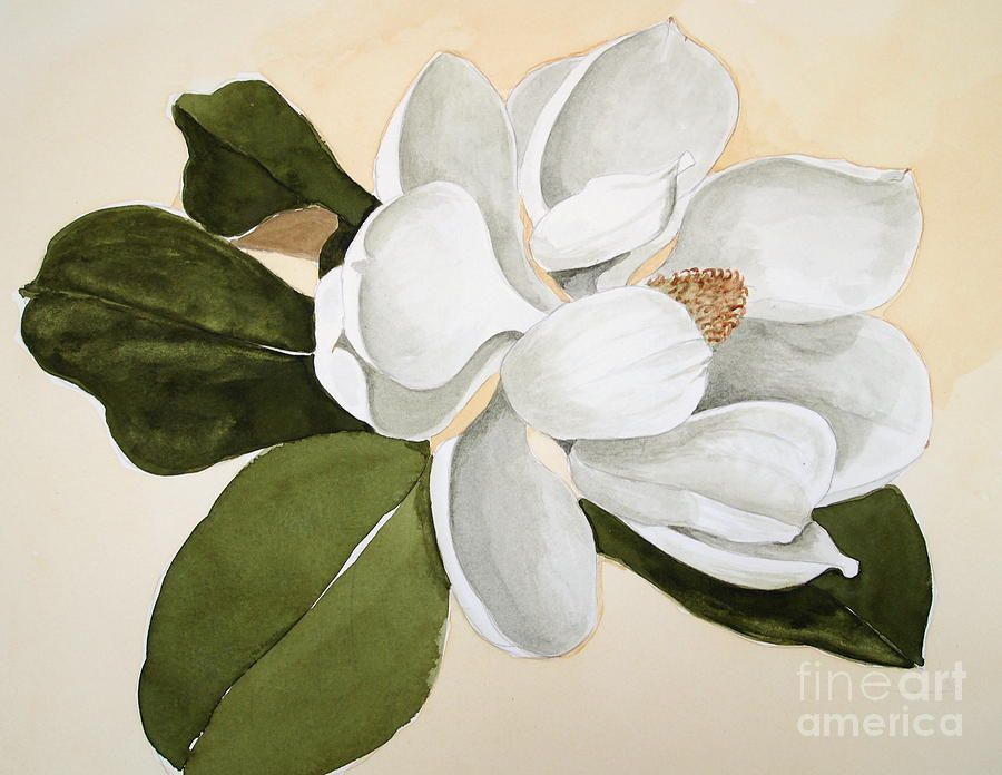 Magnolia Bloom By Nancy Kane Chapman Watercolor Paintings For Sale Magnolia Paint Flower Drawing