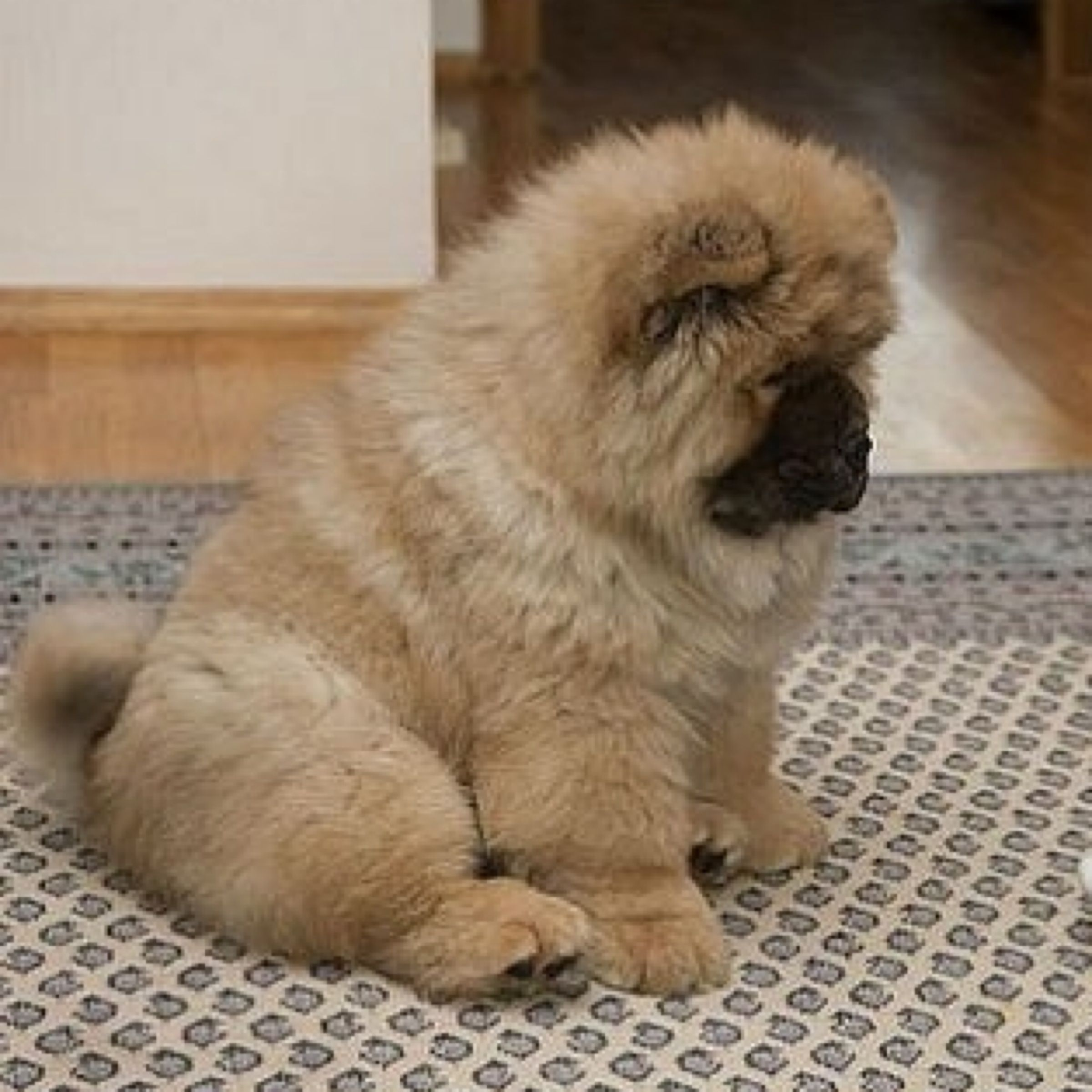 So Cute Chow Chow Chow Chow Pinterest Animal Dog And Chow - This instagram chow chow looks like a fluffy potato and its so cute it doesnt even look real
