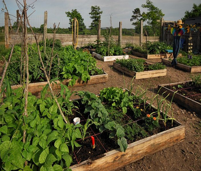 Perfect DIY Saturday #50   How To Find Gardening Tips To Prepare Your Garden (Video)