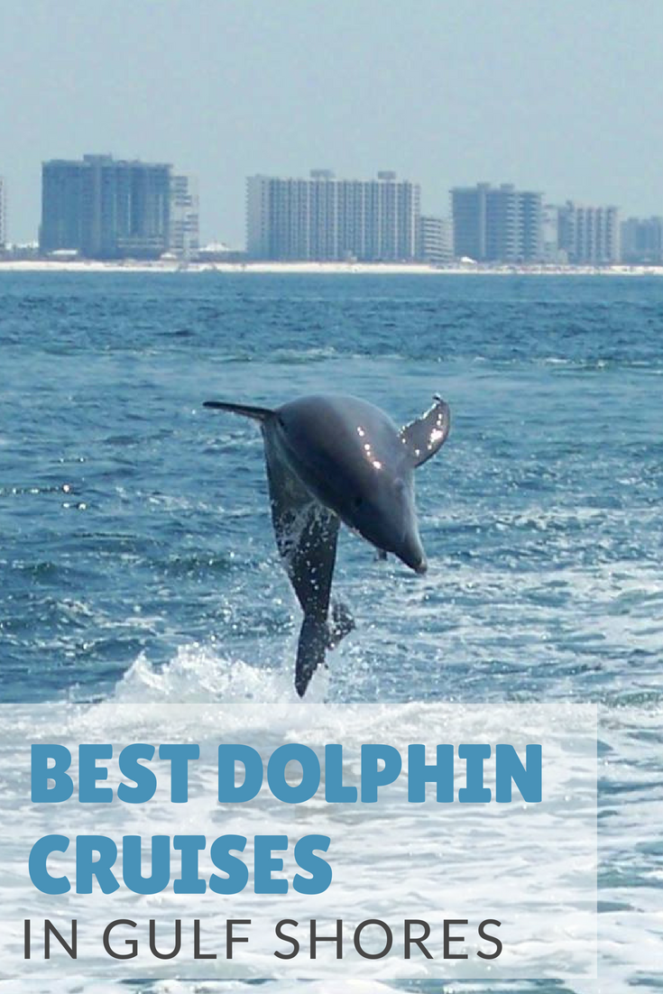 3 Ways To Take A Dolphin Cruises In Gulf Shores And Orange
