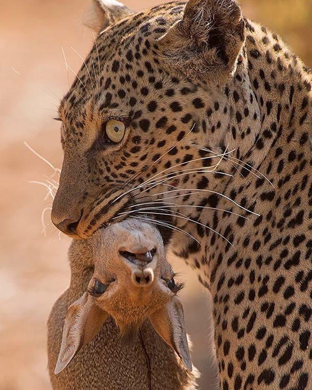 Great Wild Animals Photos Animals Wild Wild Animals Photos Animal Photo