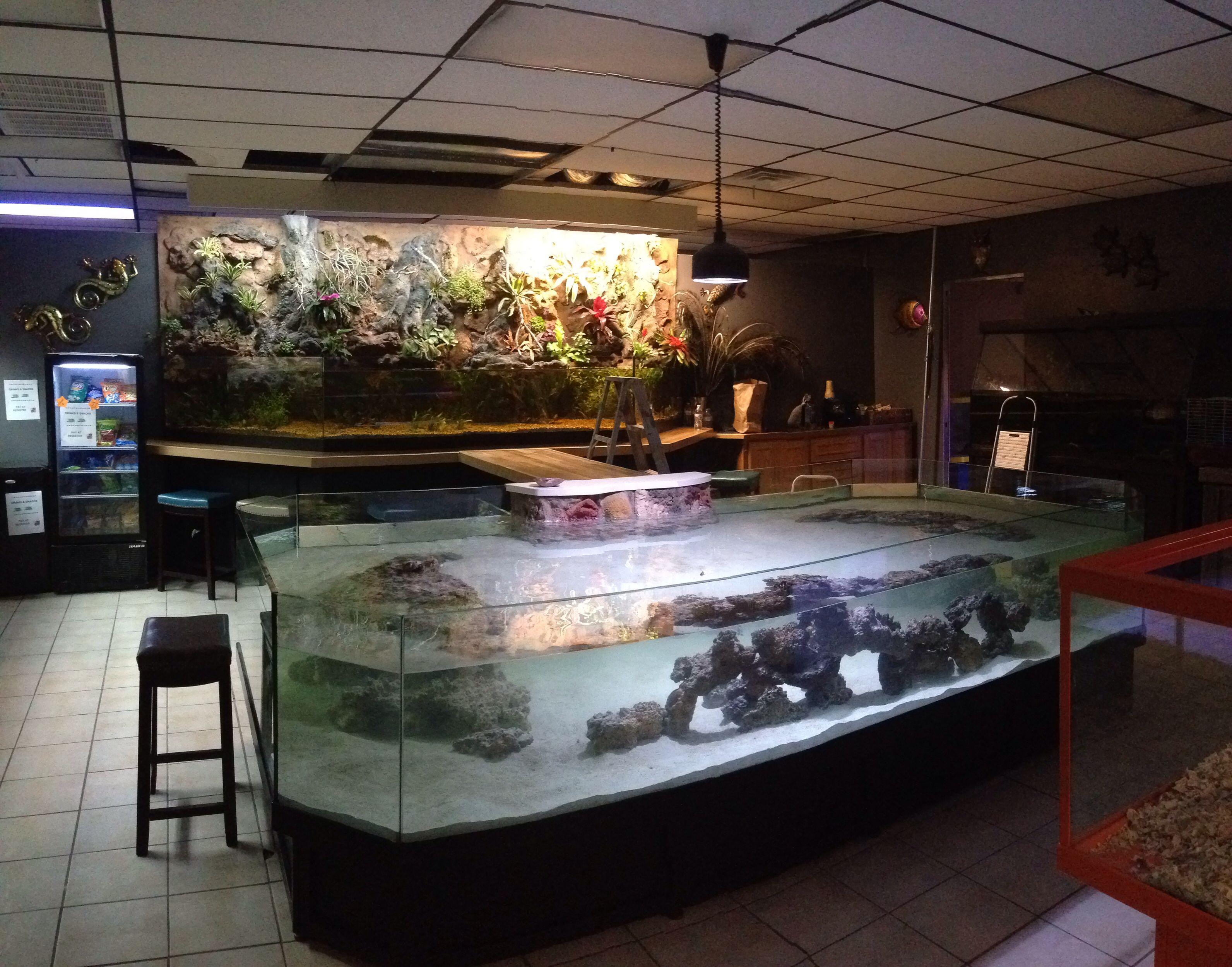 Stingray amazon tank with sitting bar at petorama for Fish tank bar