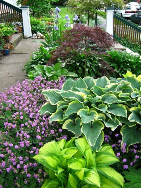 moderne vorgartengestaltung wetterfeste blumen - Vorgartengestaltung Modern