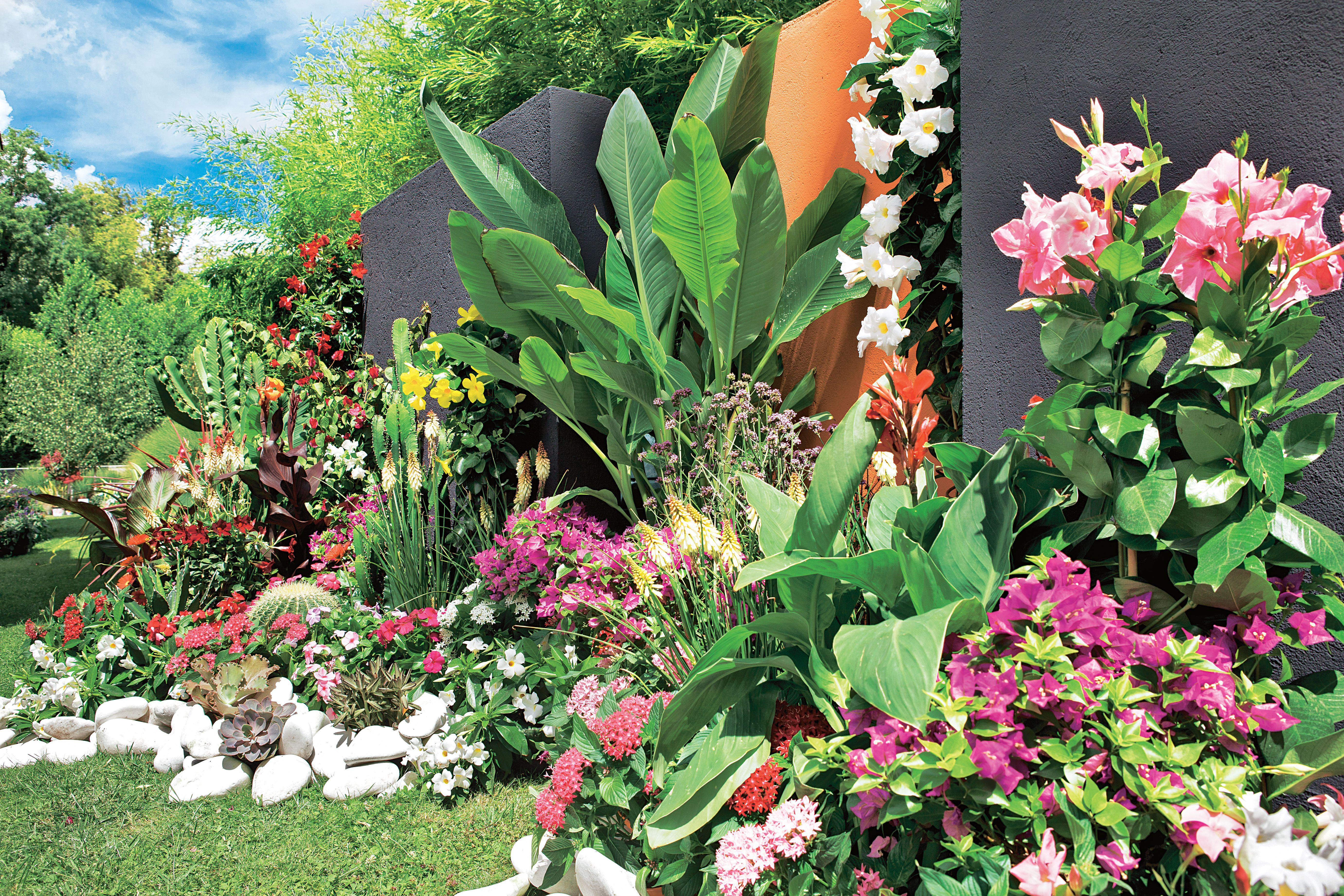 Un jardin exotique, coloré, dépaysant... C\'est possible ...