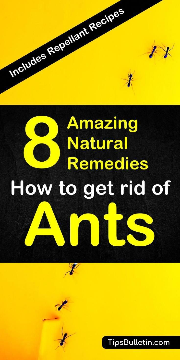 How to get rid of ants. With detailed natural pest control ...