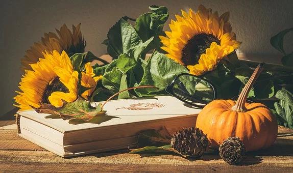 Free Image on Pixabay Pumpkins, Autumn, Pumpkin in 2020