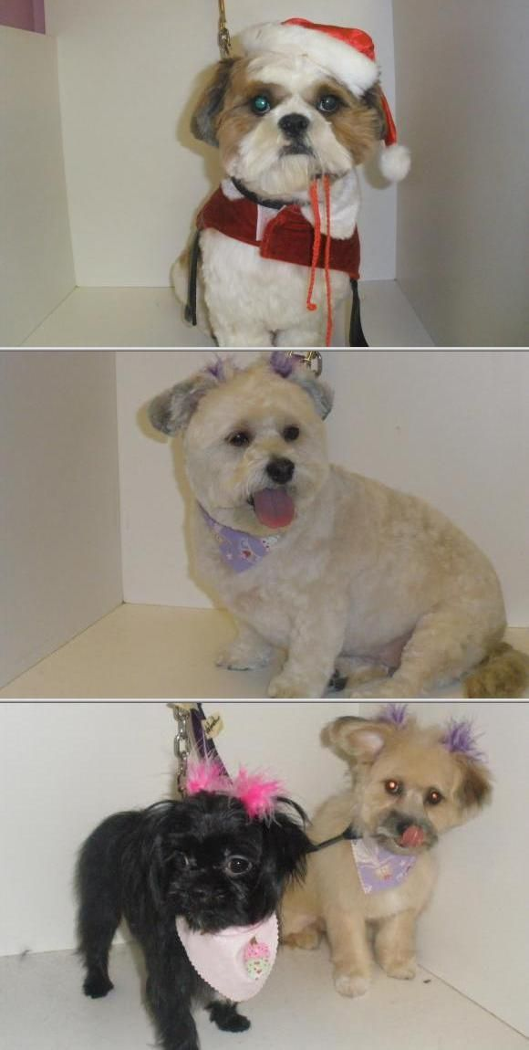Patricia Erbe Is Among The Local Pet Groomers Who Offer Professional