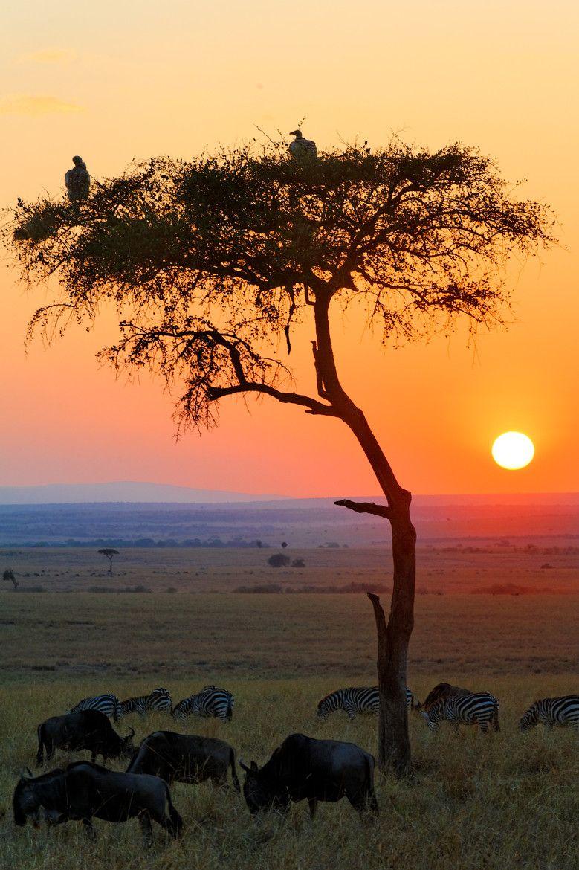 Sunrise in the Africa Savannah Fly Traveler