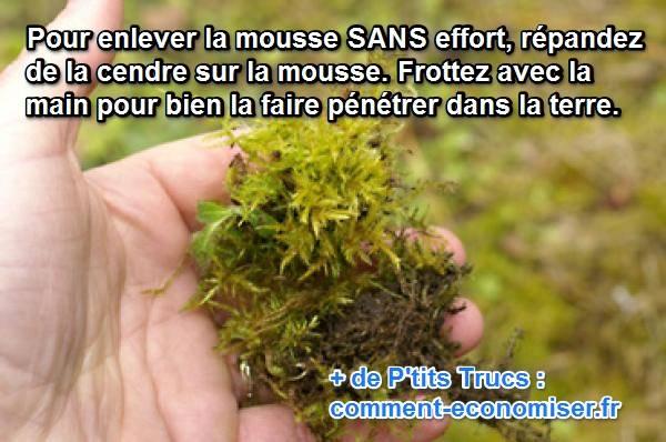 Mousse Sur La Pelouse L Astuce Pour S En Debarrasser Sans Effort En 2020 Pelouse Et Jardin Anti Mousse Pelouse Pelouse