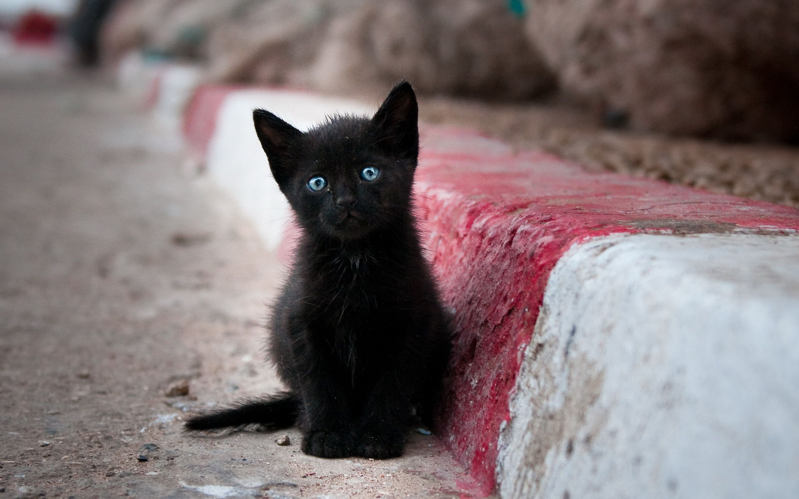 Black kitten with blue eyes s and Wallpapers