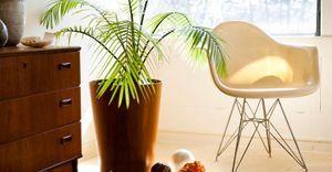 Paisagistas ensinam a escolher a planta certa para o seu apartamento