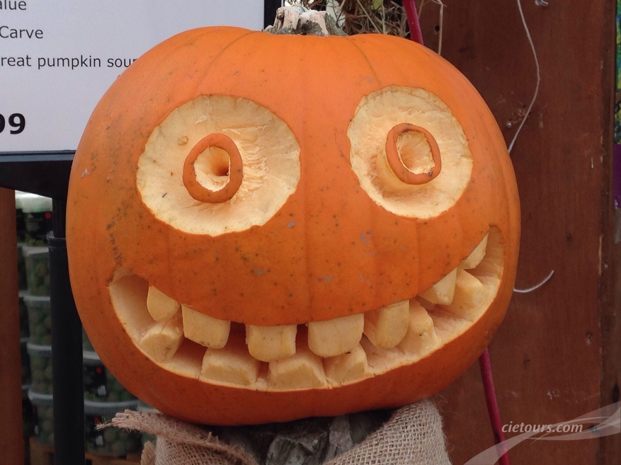 Did you know?? The traditional Halloween pumpkin