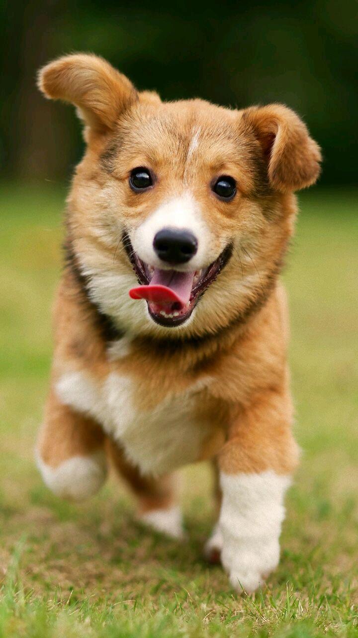 Happiest puppy running http://ift.tt/2k75meh