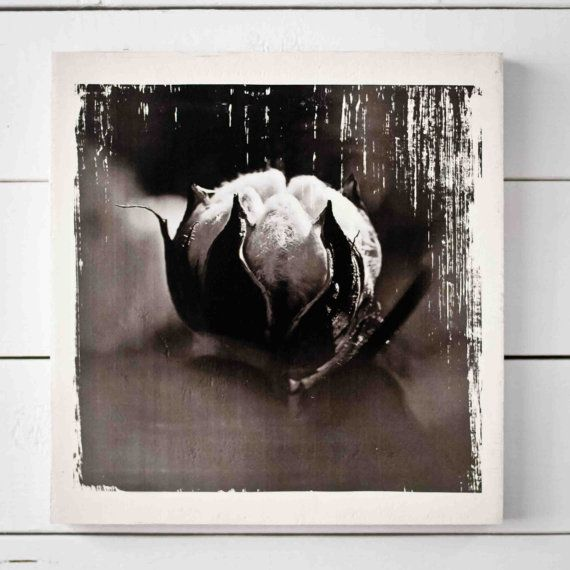 Cotton boll on wood block gel transfer distressed rustic black and white