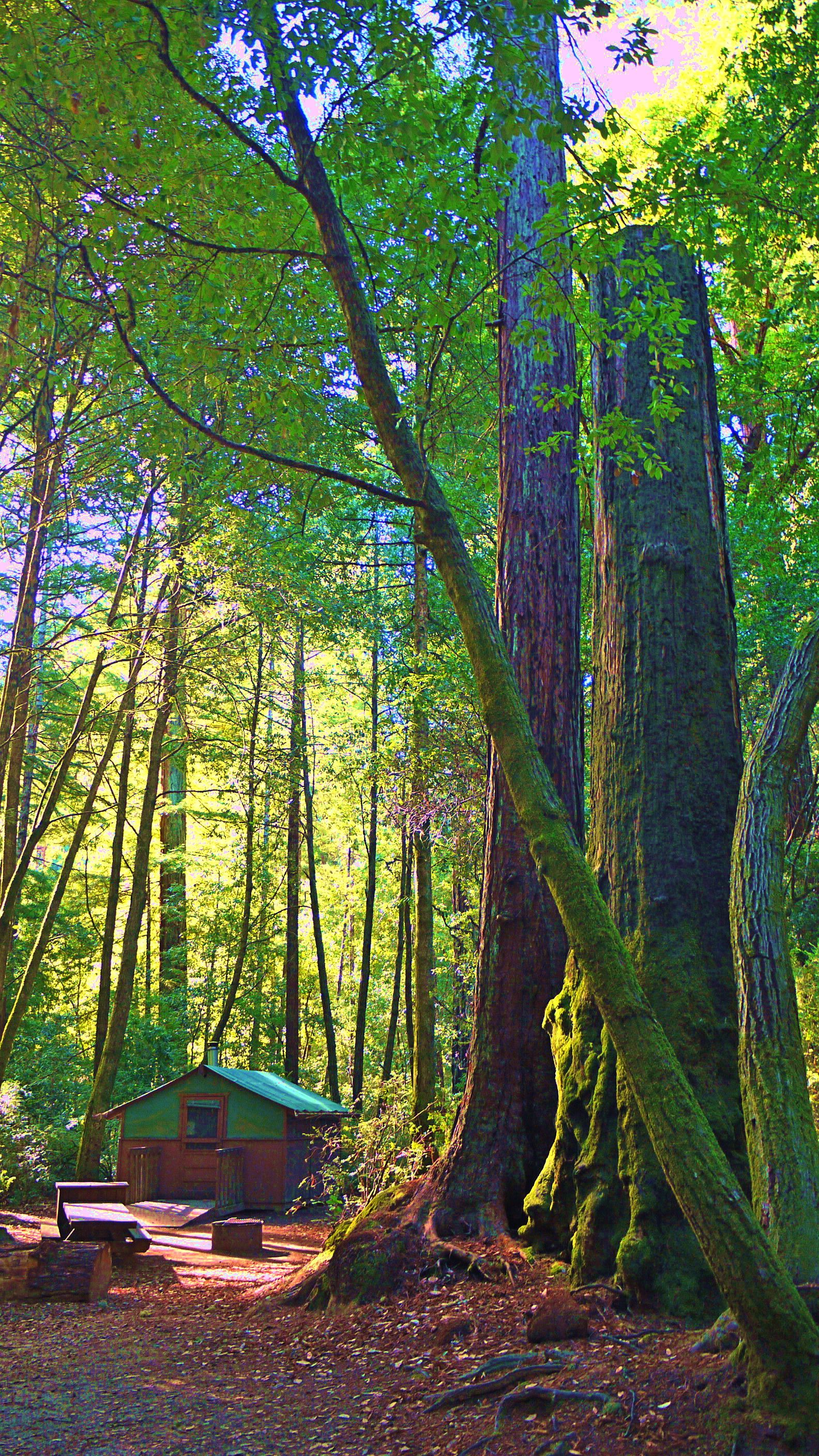 Tent Cabins At Big Basin Redwoods State Park, Santa Cruz, CA. Great Option  For Winter Camping Or Family Camping.