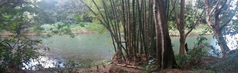 Riberas del río Espíritu Santo, Rio Grande, PR