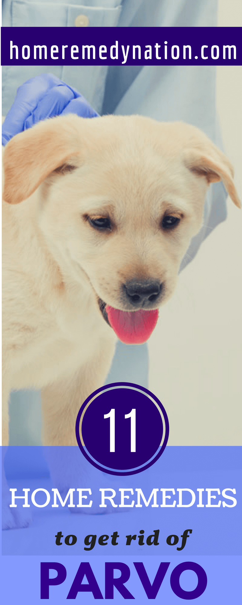 11 Effective Home Remedies For Parvo In Dogs Parvovirus Can Be Deadly