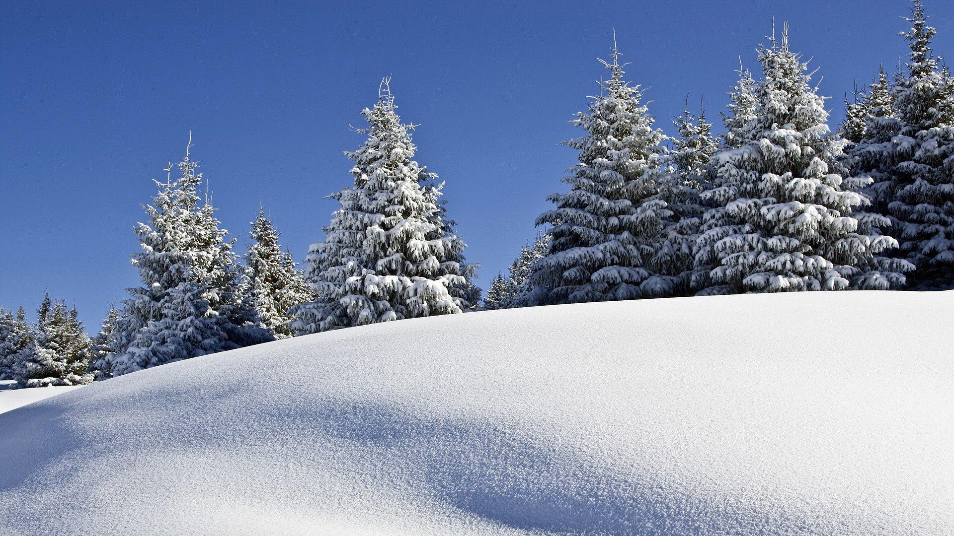 зимнее утро картинки красивые | Обои, Картинки, Природа
