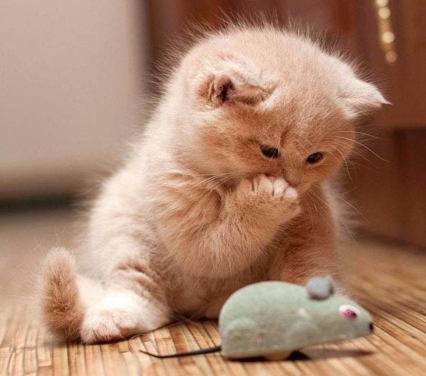 Cat Love Cat Chat Gato