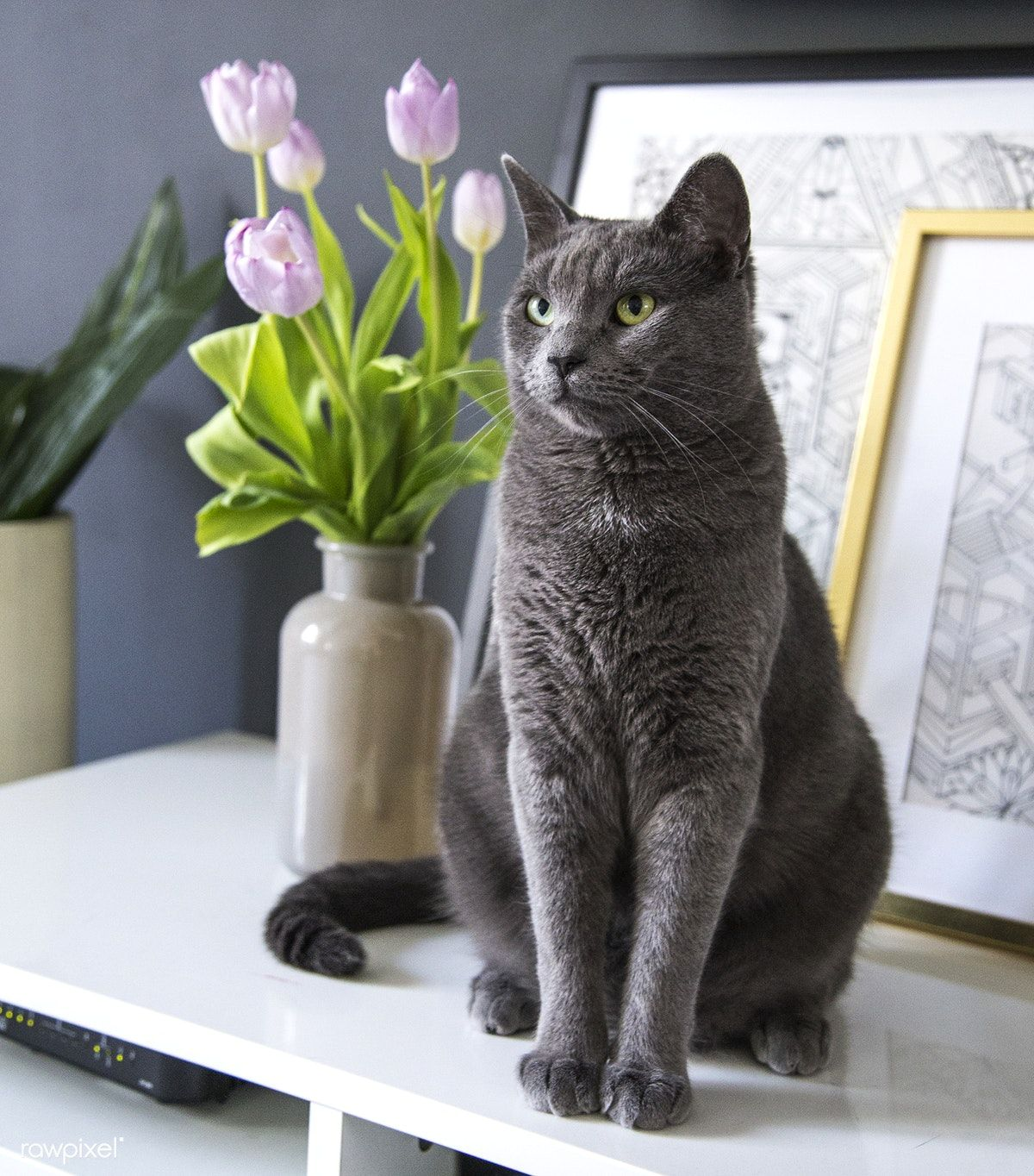 Grey domestic cat on a top free image by