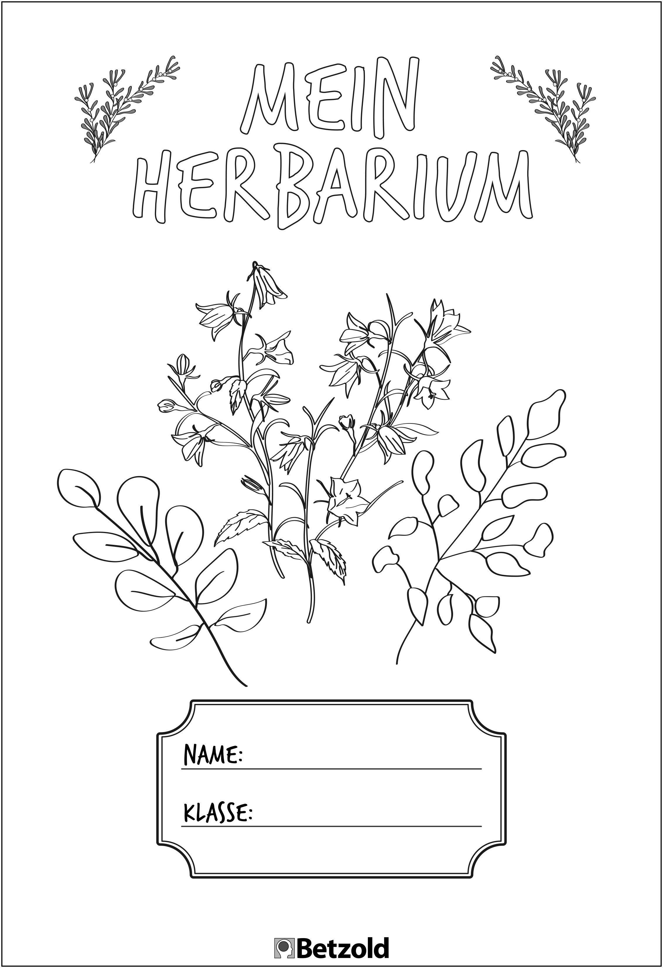 Herbarium Gestalten Vorlage Anleitung Kinder Diy Trends 7