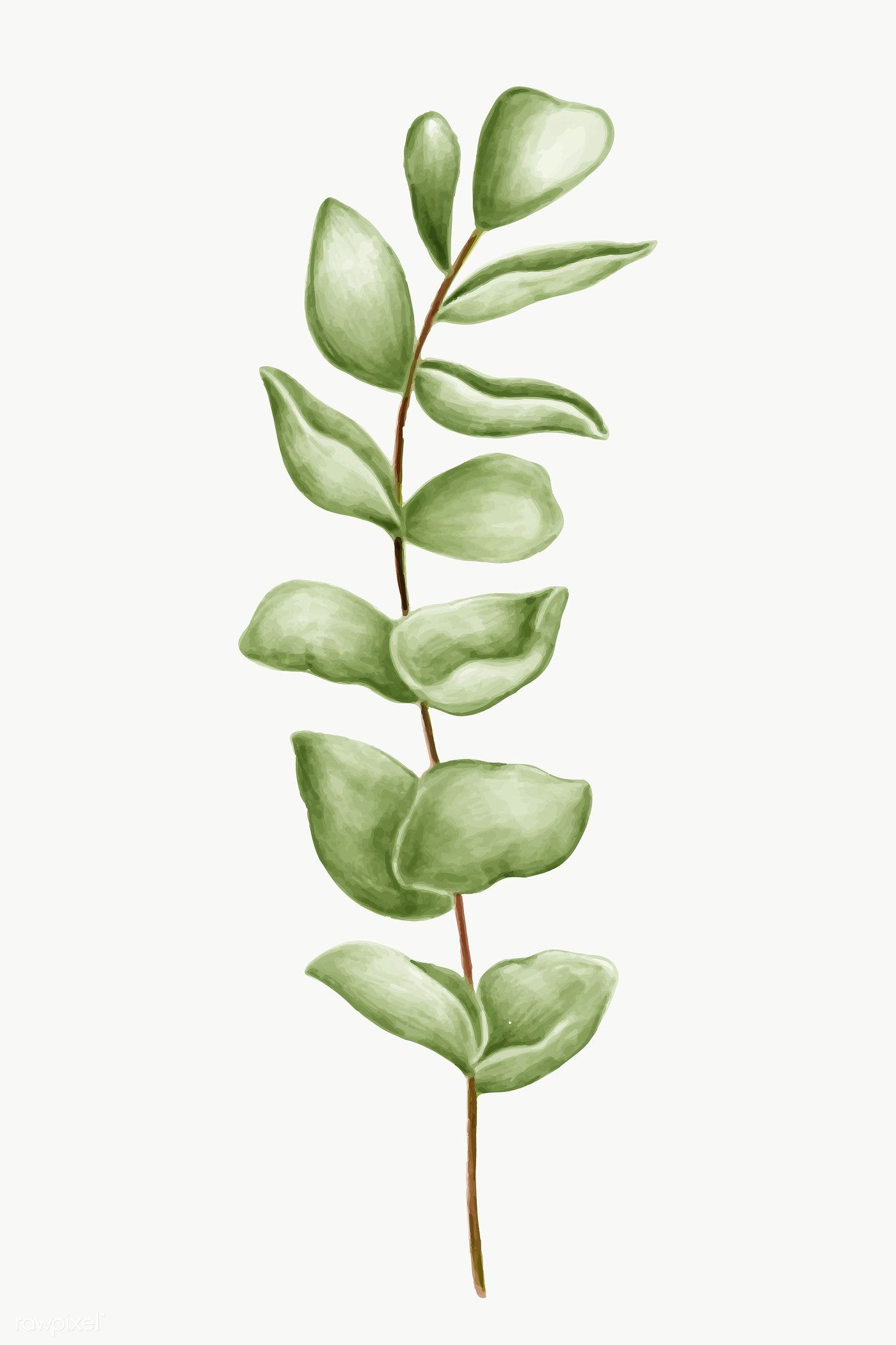 Hand Drawn Green Leaves Transparent Png Free Image By Rawpixel Com Noon Flower Illustration Green Leaf Background Leaf Images