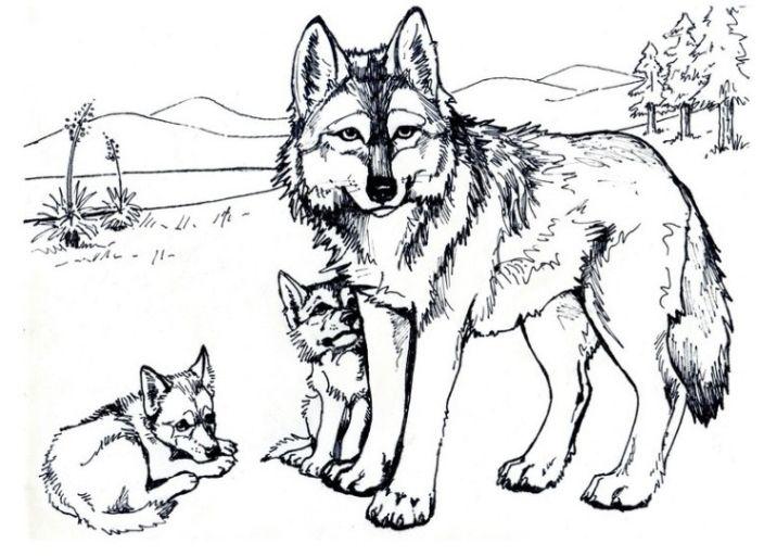 Wolf Ausmalbild Ausmalbilder Für Kinder Malen Ausmalbilder