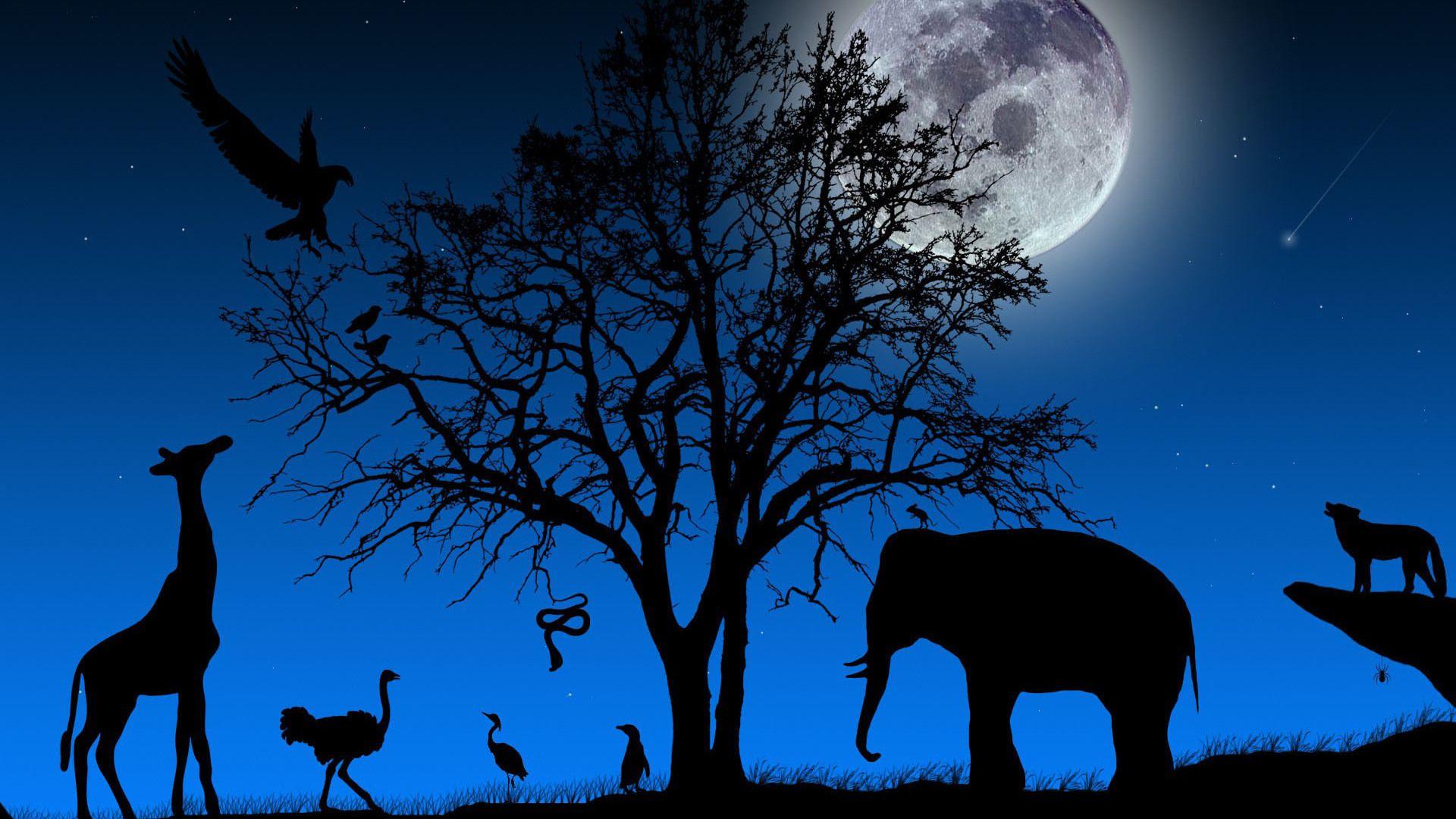 Wonderful Wallpaper Night Animal - da0b37267f0da33eec5bdc6c2655e734  2018.jpg