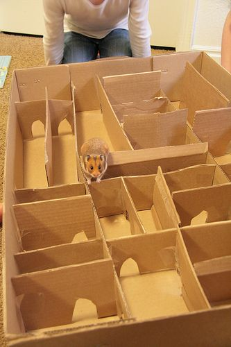 Perfect for a rainy day - Hamster maze | Hamster toys, Diy ...