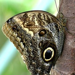 http://yourshot.nationalgeographic.com/search/?q=butterfly