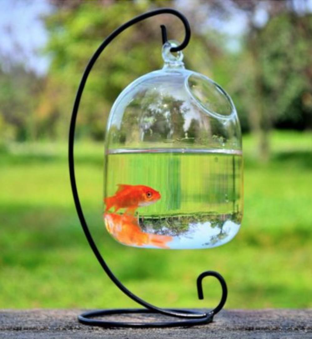 Hanging Bubble Aquarium To Use For Moss Ball Vase Fish Tank Glass Fish Bowl Hanging Vases