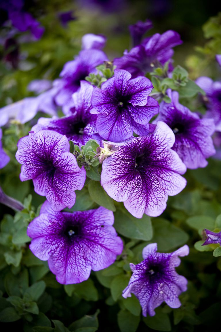 The 15 Best Annual Flowers You Need To Plant In Your Yard Annual