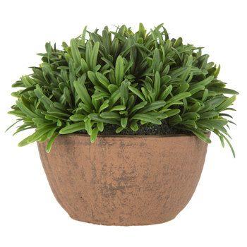 Rosemary Arrangement in Terra Cotta Bowl