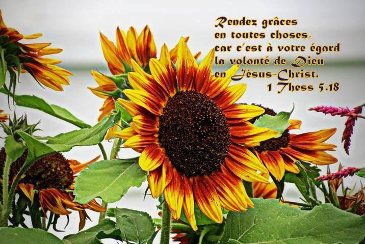 Rendre Grace Pour Tout Car Dieu Utilise Chaque Situation De Nos Vies Pour Nous Transformer Plants