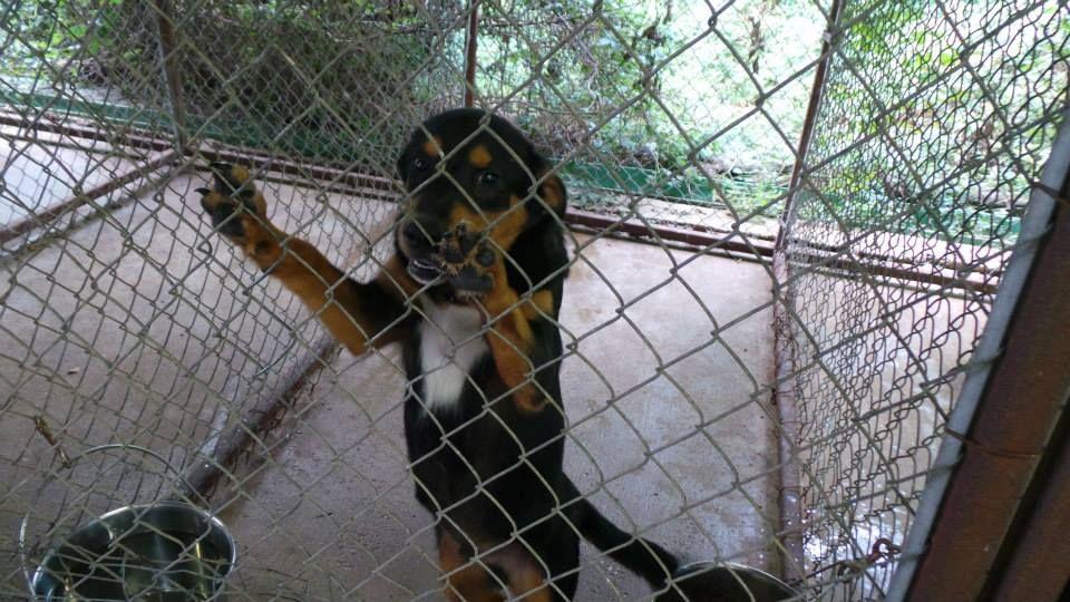 091514 henderson tx animal shelter september 16 1981