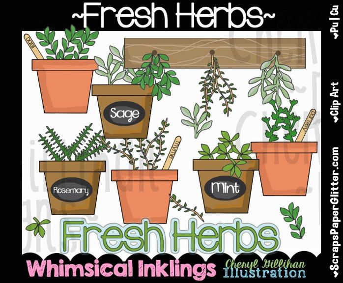 Fresh Herbs Clip Art - Commercial Use, Digital Image, Png, Clipart - Instant Download - Herb Garden, Flower Pot, Garden by ResellerClipArt on Etsy