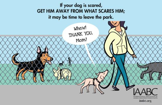 What To Do If Your Do Is Scared At A Dog Park Visit Www